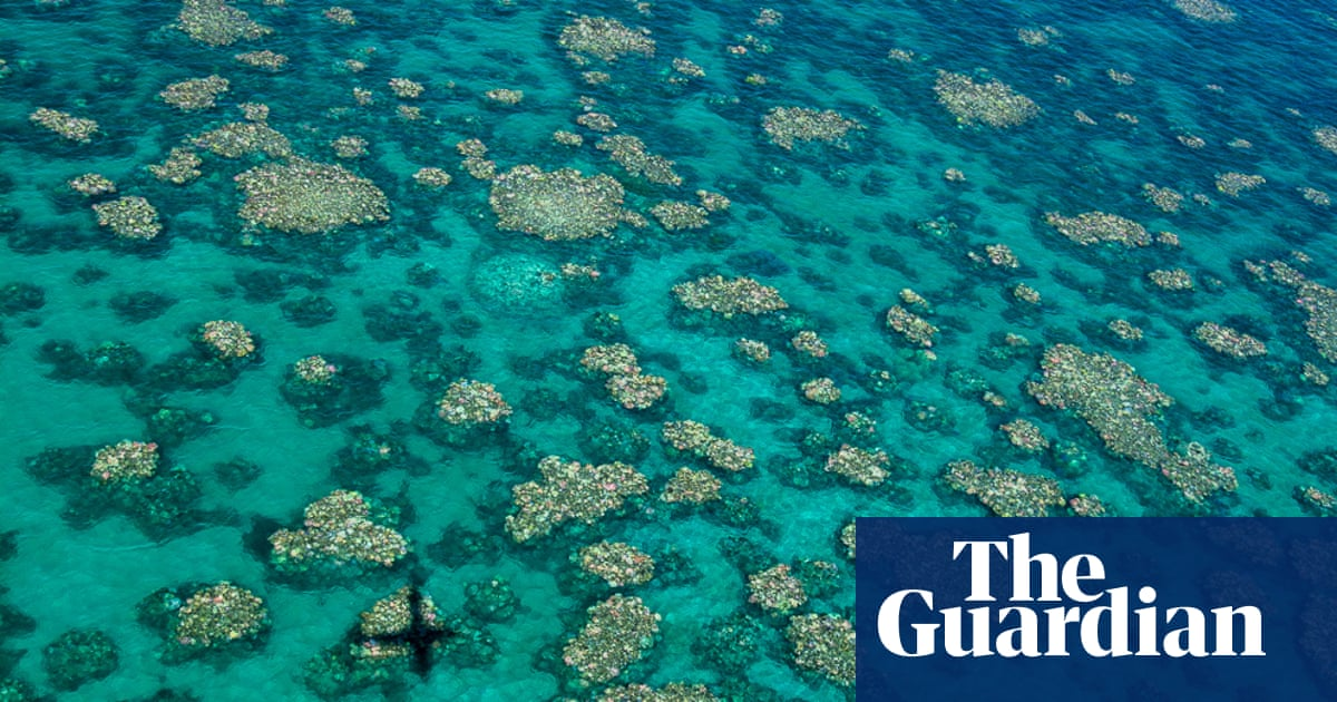 Queensland Farmers' Federation boss's denial of science sparks call to suspend reef grants - The Guardian image