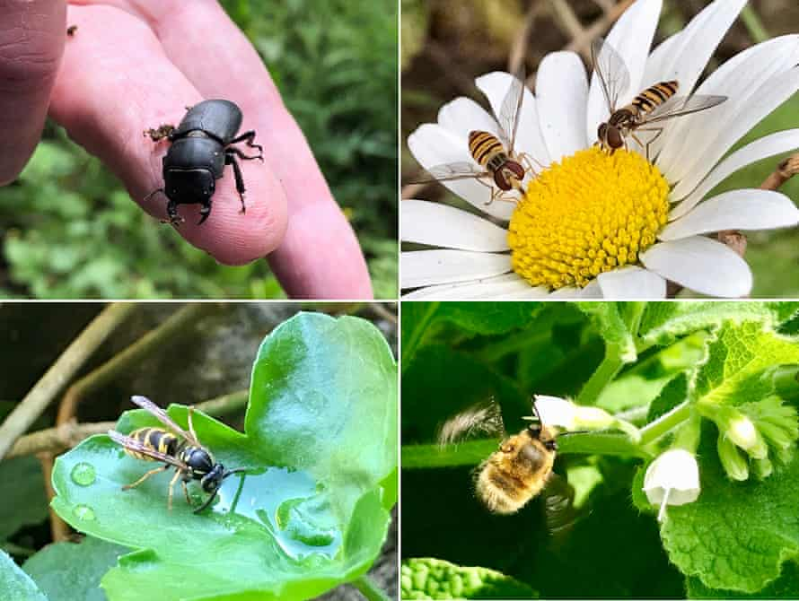 Selection of insects in the Barbican wildlife garden