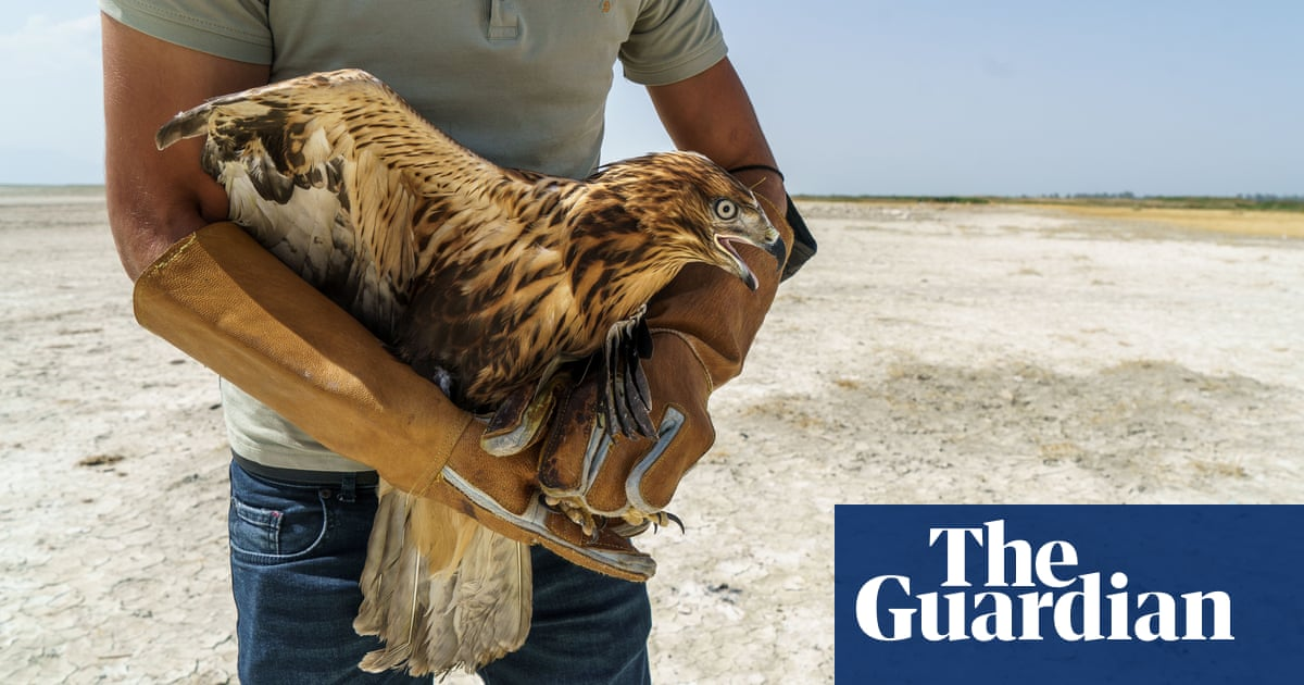 'The water used to be up to your armpits': birds starve as Turkey's lakes dry up