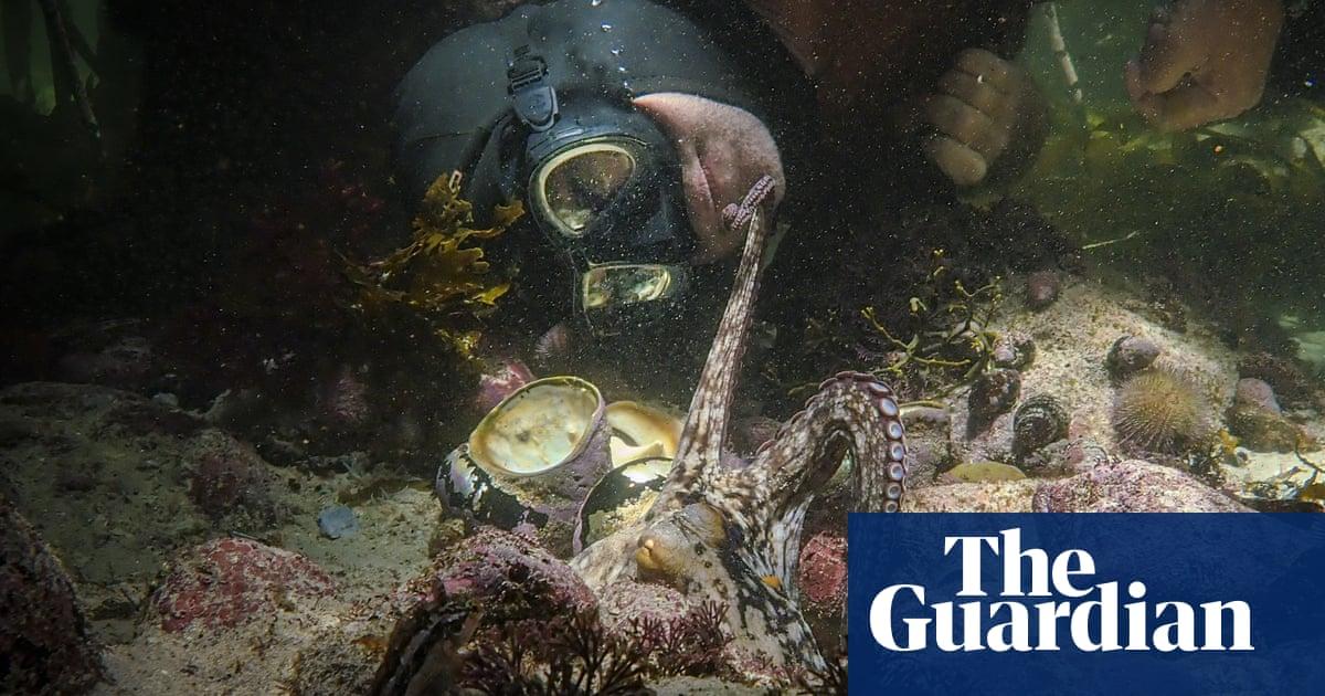 My Octopus Teacher, heartwarming nature film, wins best documentary Oscar