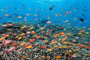 The World Heritage-listed Great Barrier Reef.