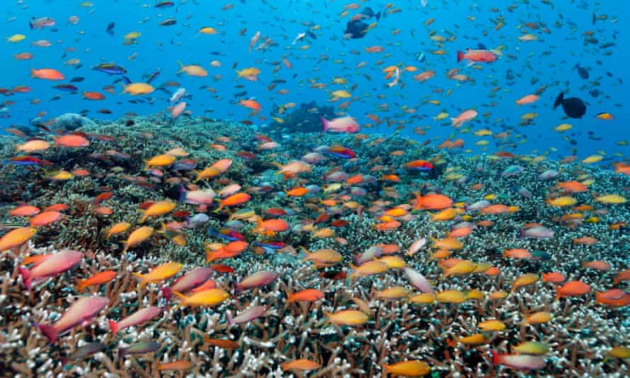 The Senate will look at how and why the Great Barrier Reef Foundation was awarded a $444m grant with no competitive tender process.