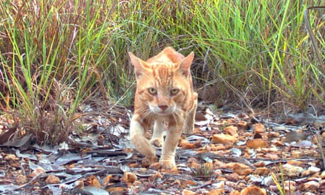 Feral cats now cover 99.8% of Australia