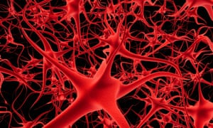 Neurons and nerves in a brain