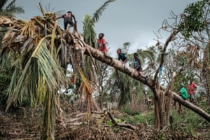 Children climb on a coconut tree damaged by the winds of cyclone Idai in Beira