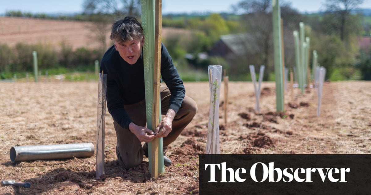 'I'm seen as the fool': the farmers putting trees back into the UK's fields