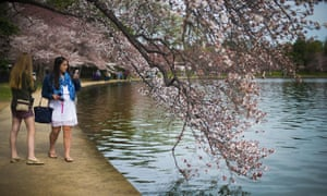 Women snap and share photographs of cherry trees beginning to bloom at the Tidal Basin in Washington DC.