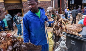 A market trader offers the body of a lappet-faced vulture at the Faraday muthi market in Johannesburg.