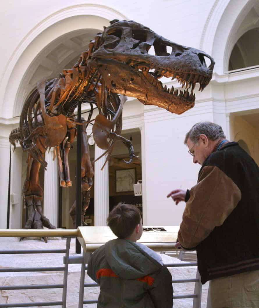 'Sue', the largest, most complete, and best preserved T rex fossil.