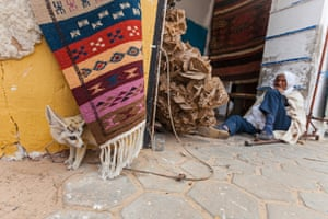 Sultan, a famous captive fennec that is displayed tied on a rope in front of a tourist shop, is the main attraction in the souk of Douz, a desert town in Tunisia.