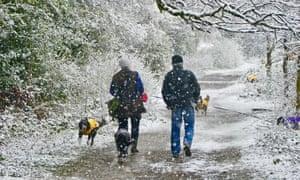 Snow falls in Clayfield Copse, Berkshire