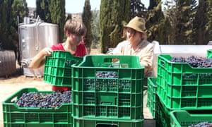 Vineyard volunteering on the Algarve