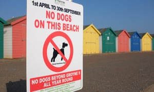 Not going to the dogs … one of Dawlish's many signs.