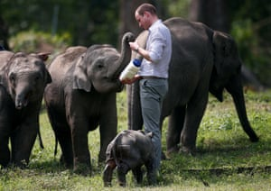 Prince William feeds a baby elephant at Panbari reserve forest in Kaziranga in Assam, India