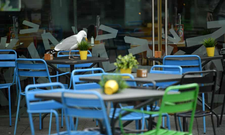 a seagull on an outside table at a restaurant