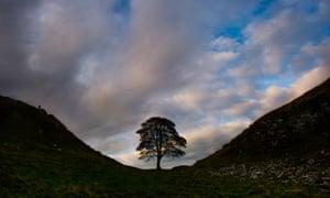 Sycamore Gap, Northumberland