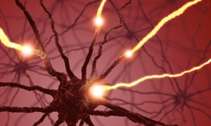 Interconnected neurons transfer information with electrical pulses