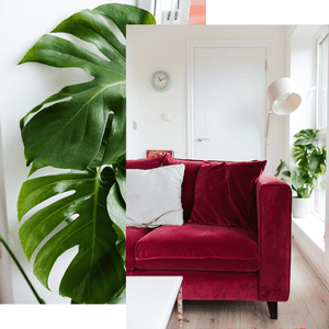 Composite of detail of plant and red sofa