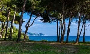 View of the sea through the pine woods, Campania Cilento, Ogliastro Marina, Italy.