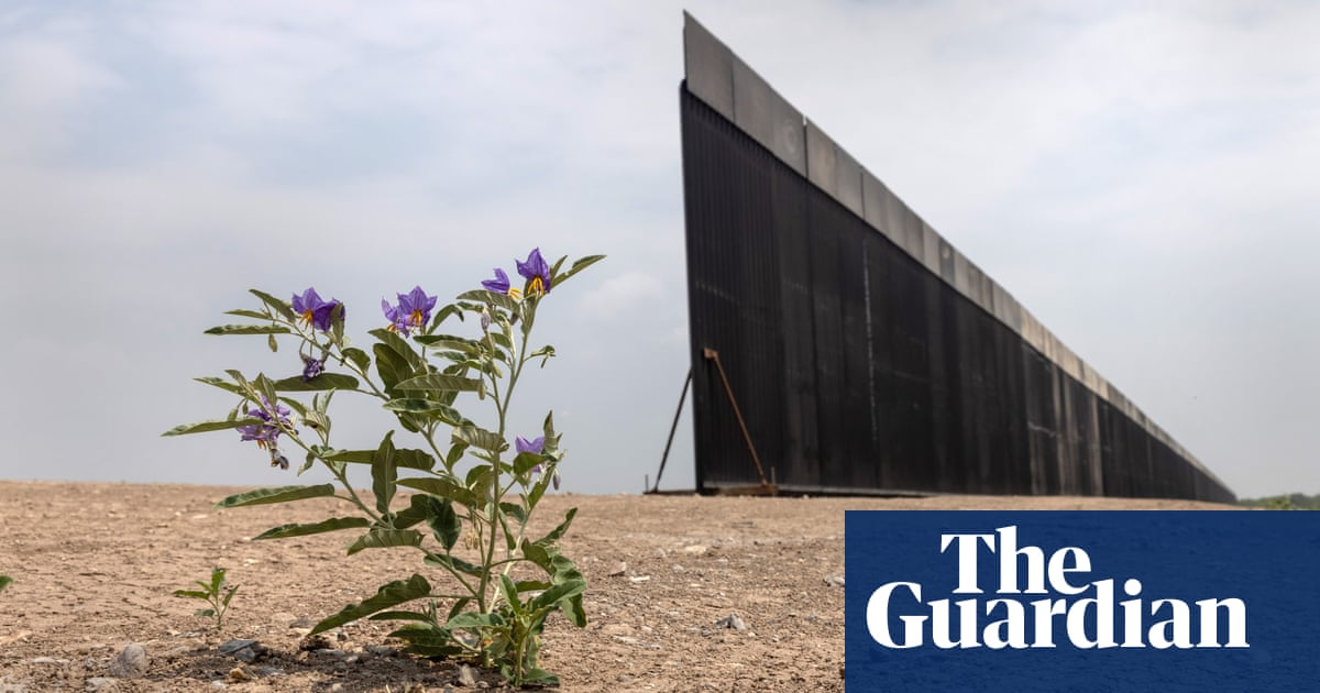 Ups and downs: Trump's $27m-a-mile border wall being scaled with $5 ladders