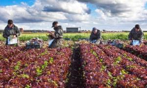 EU farm workers in Tarleton, Lancashire.