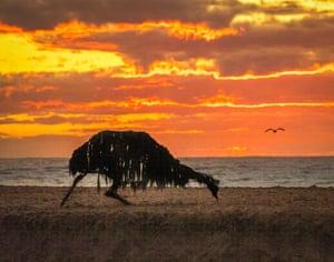 A driftwood emu on the sand