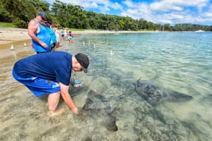 Man feeding a short-tail stingray