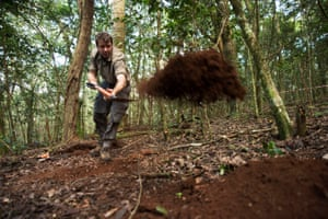 Shovel by shovel, Professor Simon Willcock from the University of Bangor in Wales digs a test pit trying to hit bedrock on the top of Mount Lico, while caterpillar droppings rain down through the forest canopy.