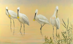 Spoonbills on Cley marshes by Martin Woodcock