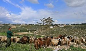 A Lebanese shepherd walking with his goats in Sidiqin in 2007