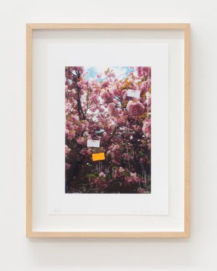 Nicholas Cheveldave, Untitled