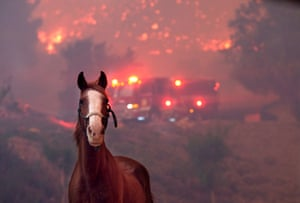 Thousand Oaks, US. Horses are spooked as the Woolsey Fire burns near Paramount Ranch, California. About 75,000 homes have been evacuated in Los Angeles and Ventura counties due to two fires in the region.