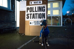 Walter the whippet from Walthamstow waits outside a polling station in east London