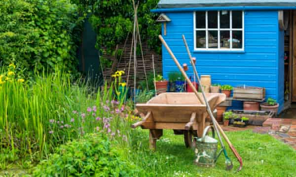 Country garden scene with wooden wheelbarrow, blue potting shed and wildlife area to the left