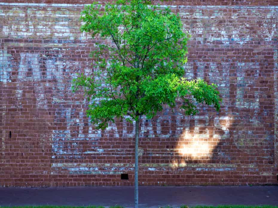 A young tree in the Historic District of Savannah, Georgia.