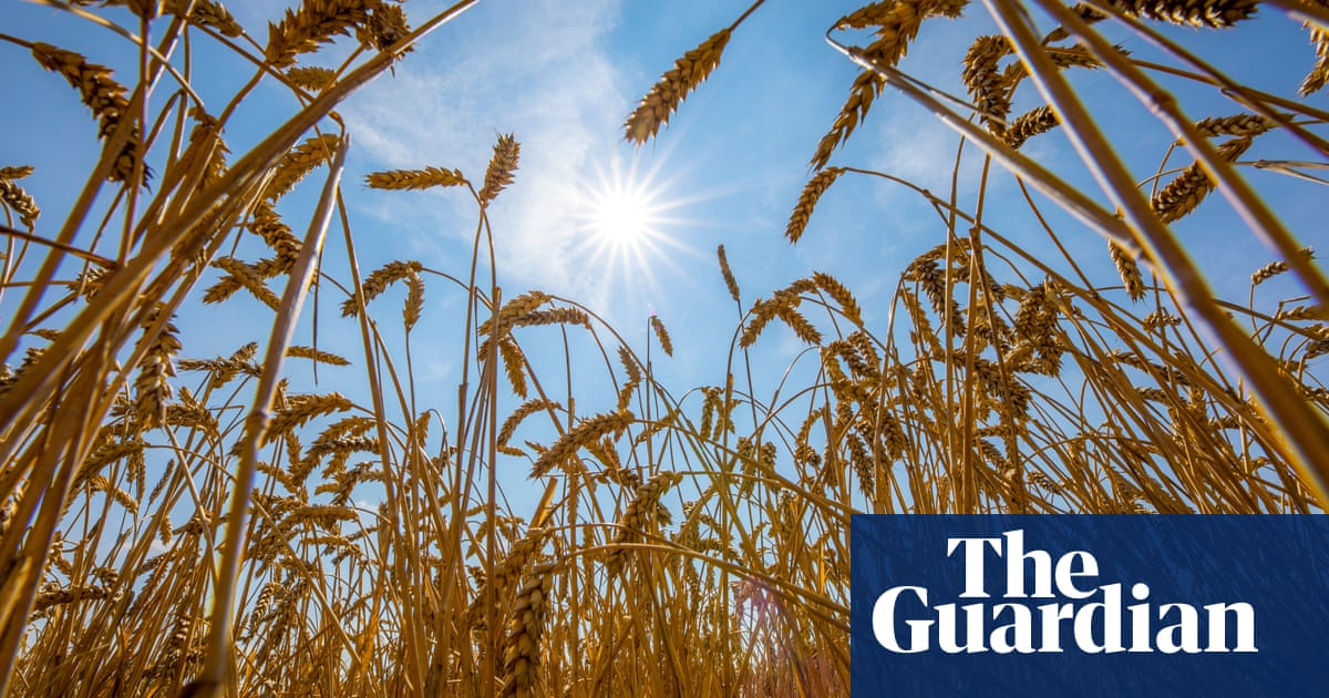 Crop losses to pests will soar as climate warms, study warns