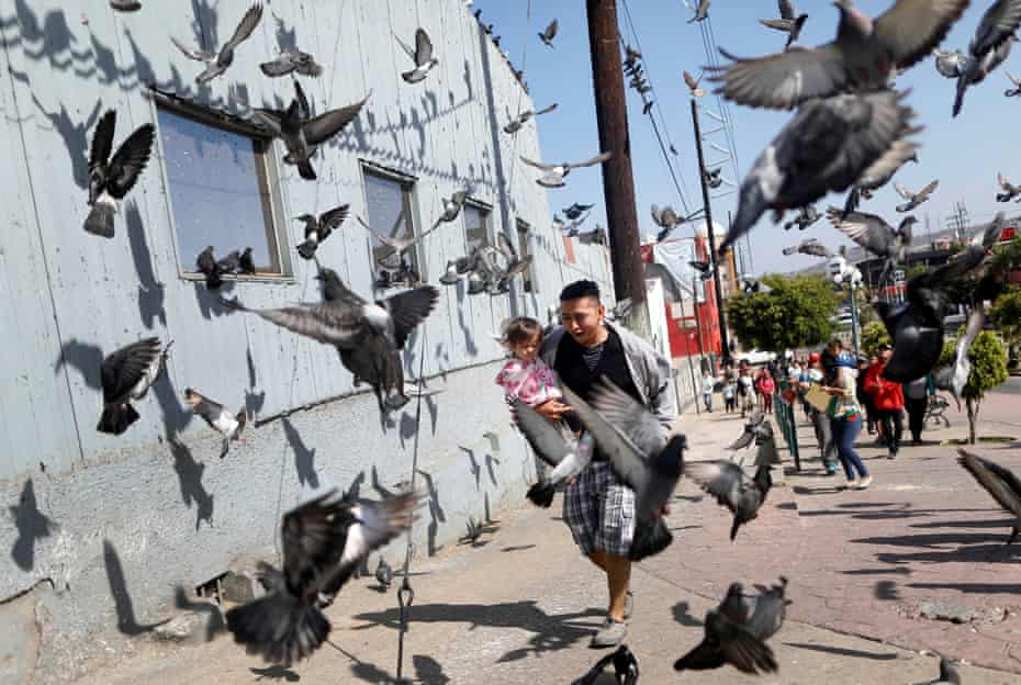 A man and his daughter, run between pigeons at the end of their journey, prior to preparations for an asylum request in the US, in Tijuana, Baja California