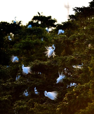 Egrets in Xiangshan forest park in Nanchang City, capital of east China's Jiangxi Province