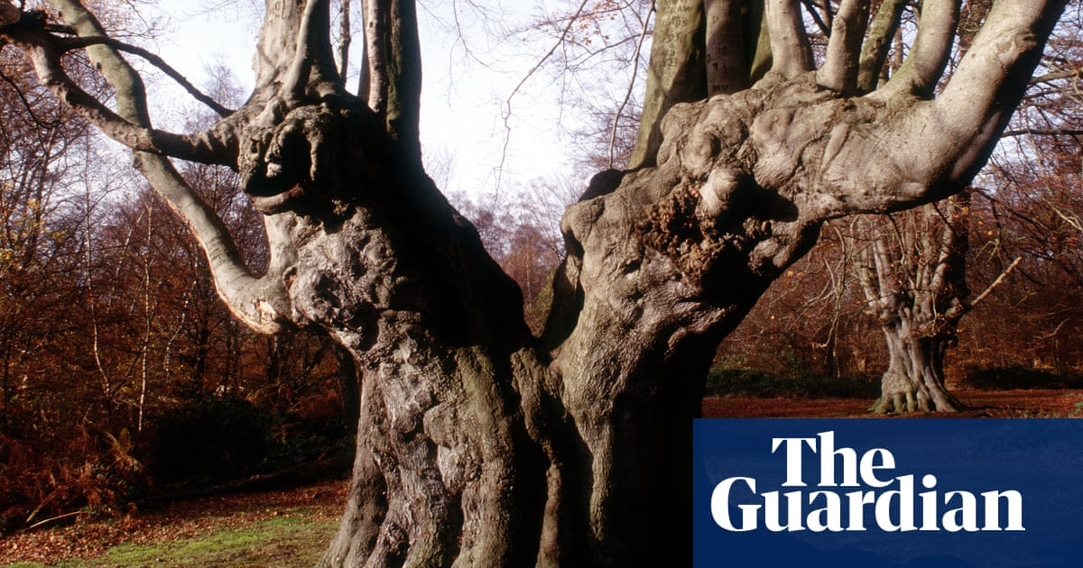 Out of the Woods by Luke Turner review – memories of sexual