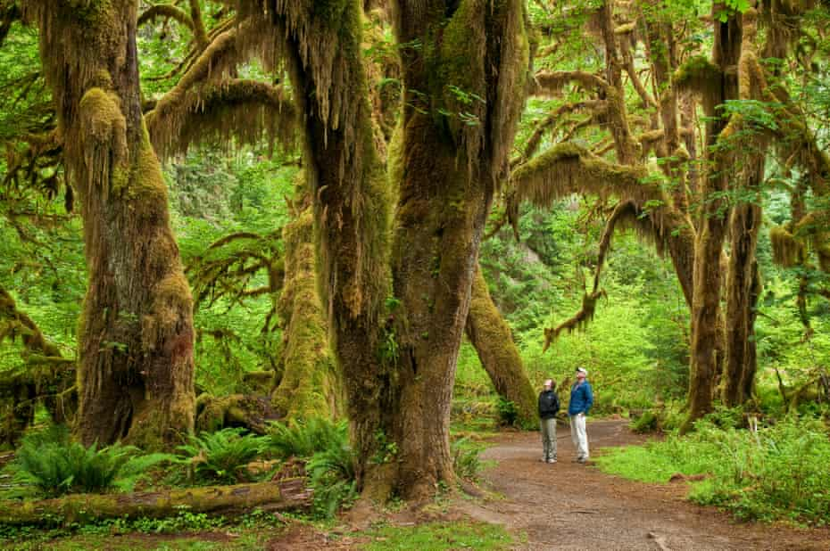 Hall of Mosses Trail at Olympic national park in Washington.