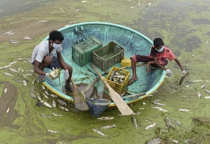 Hyderabad, India. Fishermen collect dead fish from Gandi lake. Authorities said about 75% of the waterway's fish had died after waste chemicals were released from a nearby industrial estate in heavy rains