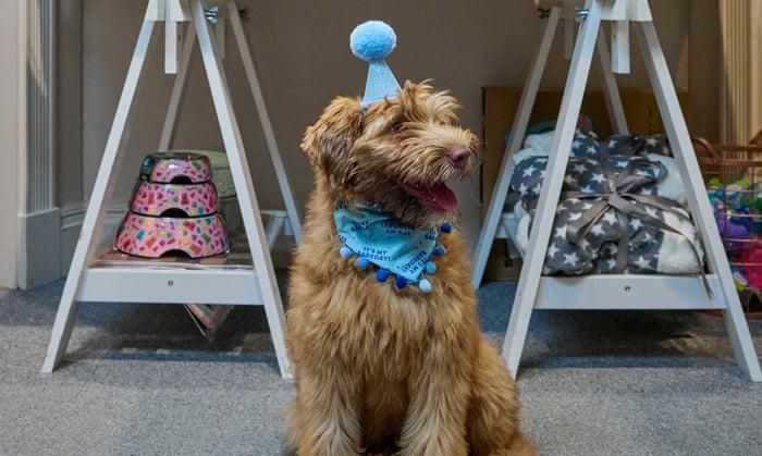 Daisy's Dog Empawrium: how a former chef became a doggie-treat entrepreneur