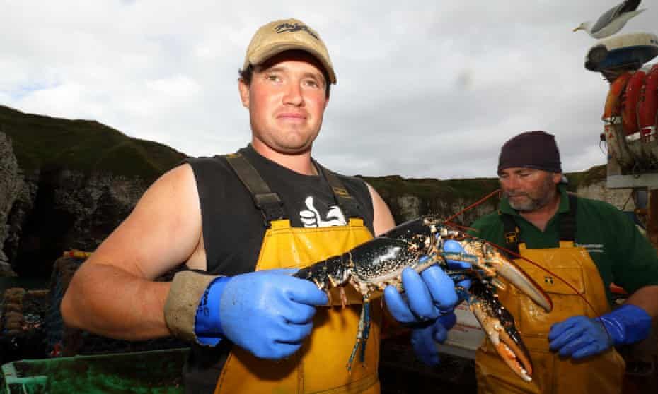 'I wouldn't advise a son to go into fishing, no' ... Matthew Emmerson with part of the lobster catch. Photograph: Kevin Rushby/Guardian