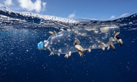 A clear plastic bottle drifting in the ocean.