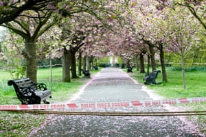 A cherry blossom tunnel near Ranger's House in Greenwich park is taped off to visitors, although some cannot help themselves