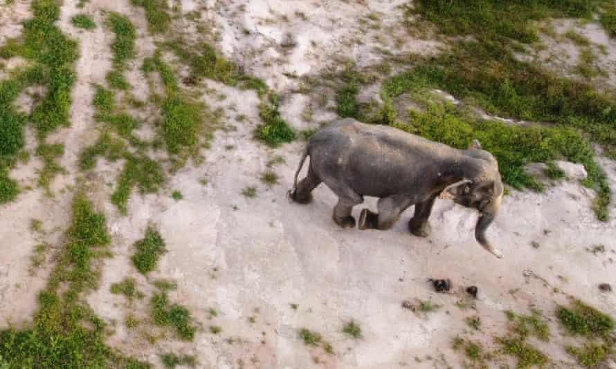 Elephant at Wildlife Friends Foundation Thailand sanctuary, Phetchaburi province