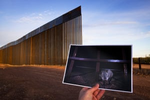 The border wall replacing the vehicle barrier at Gran Desierto de Altar in the Sonoran desert.