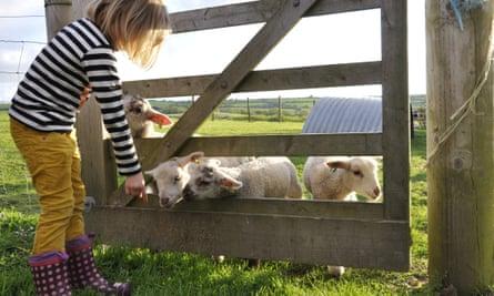 Trevorrick Farm in Cornwall
