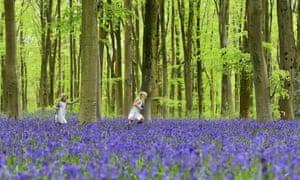 children running through a bluebell wood