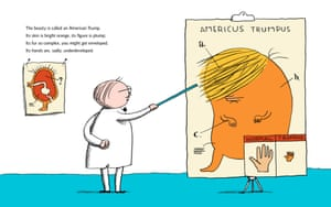 Illustration from A Child's First Book of Trump by Michael Ian Black.